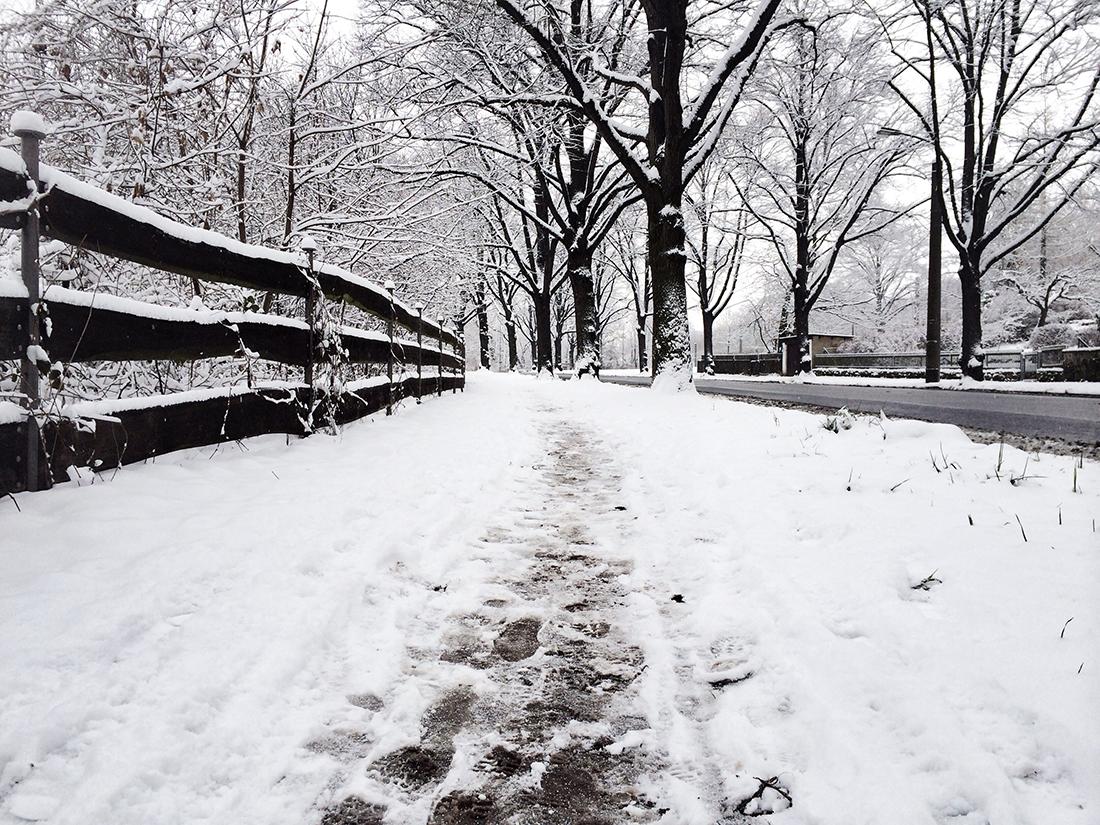 snowy street in dresden
