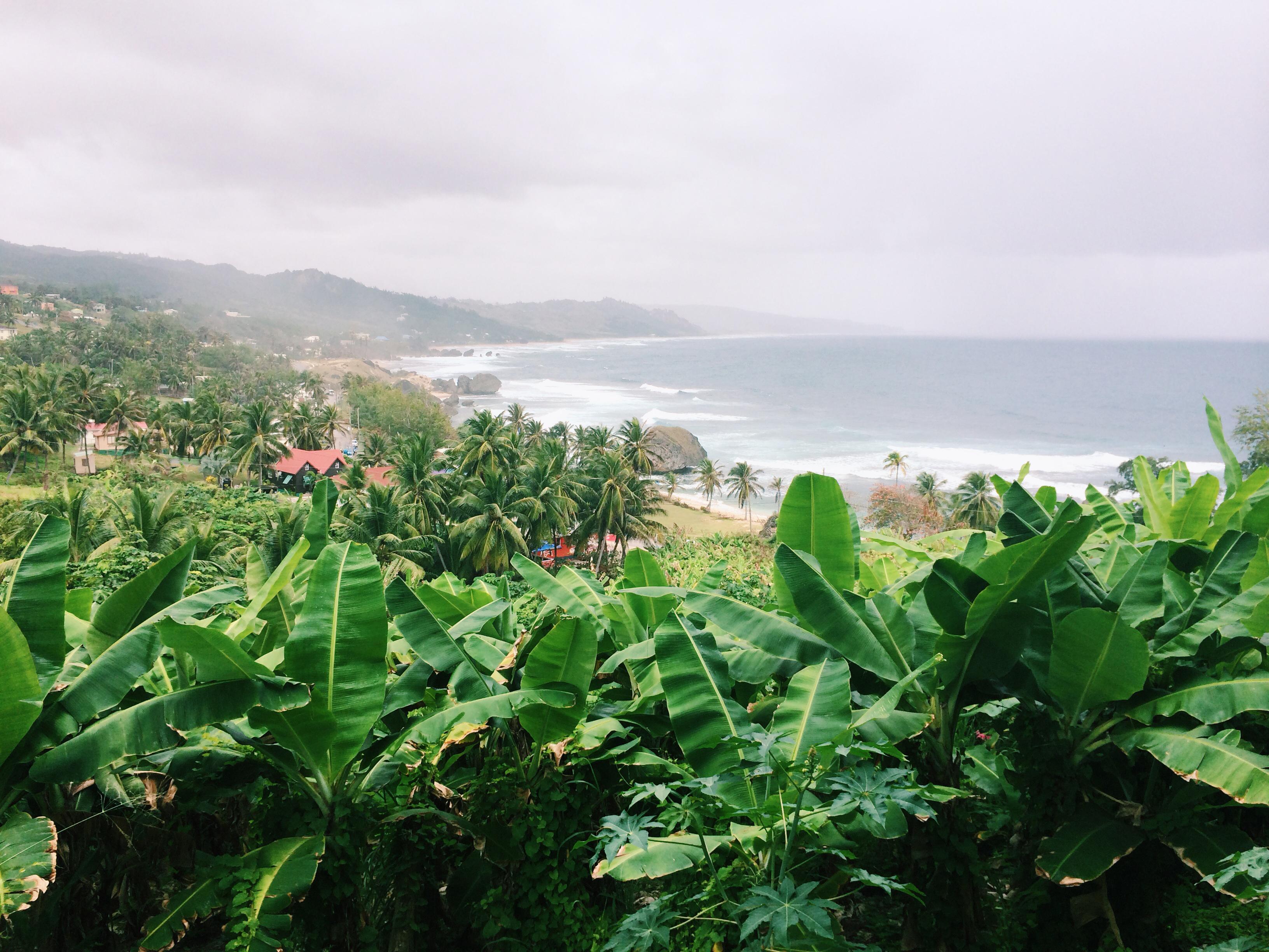 view over the bay at Bathsheba Barbados