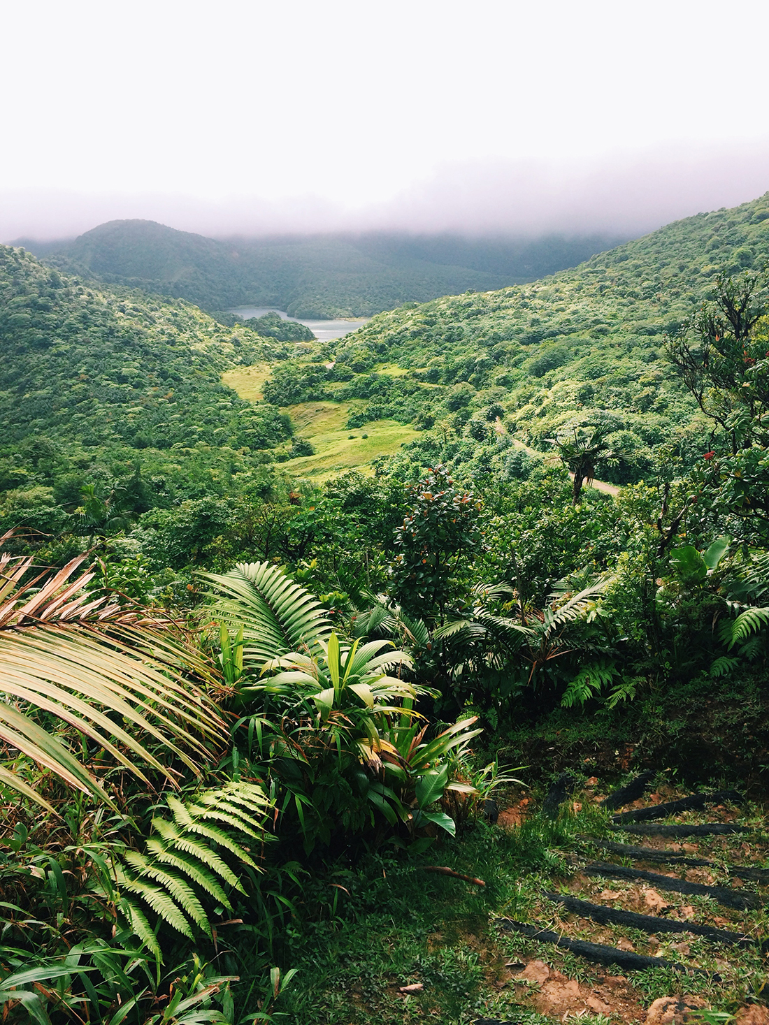 hiking trail in Dominica