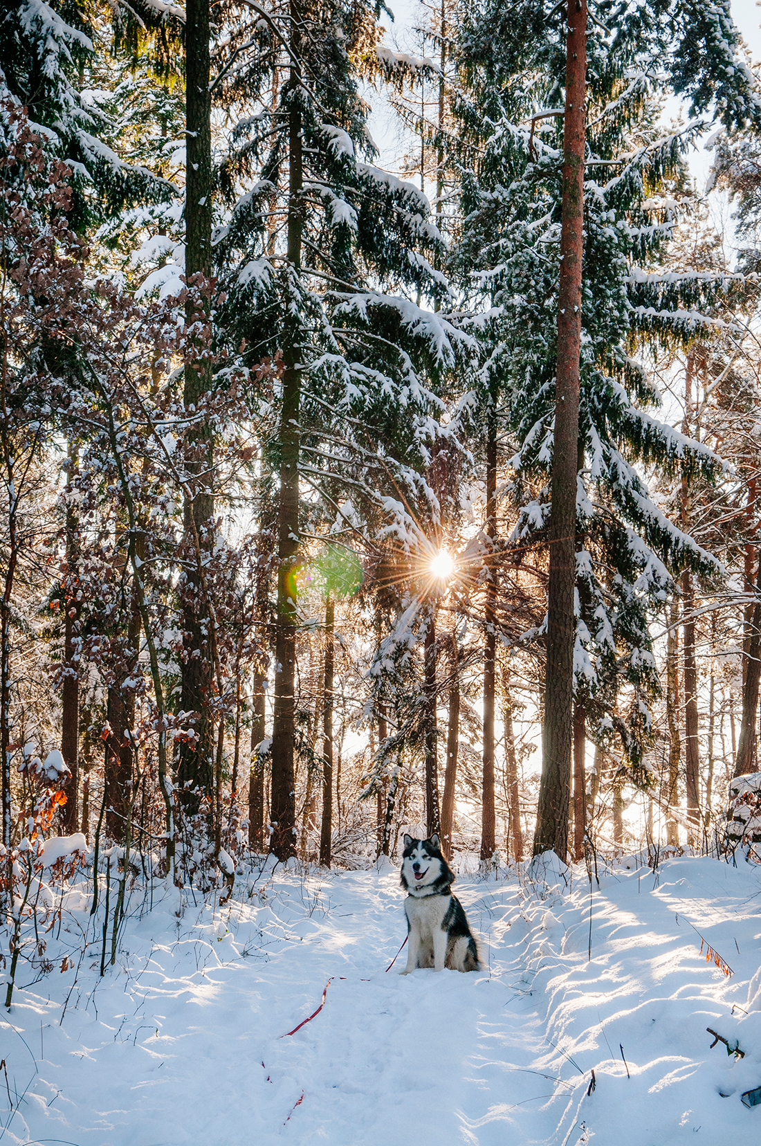 dog enjoying a winter hike in Rosenthal-Bielatal