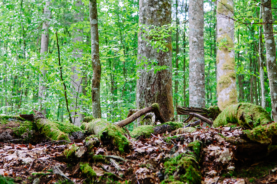 roots in the bavarian national park