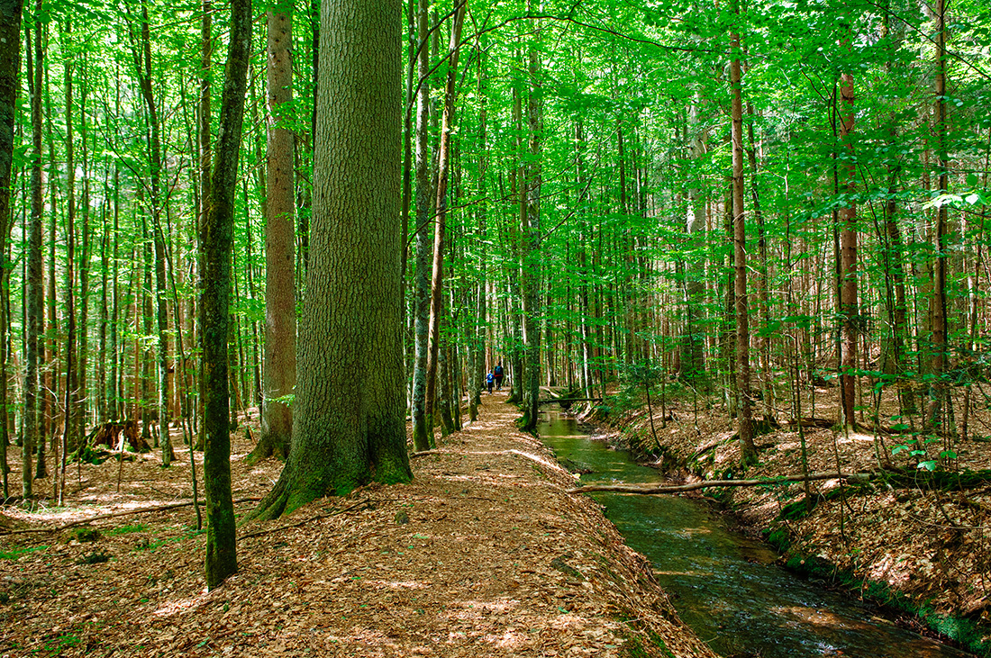 path in bavarian national forest