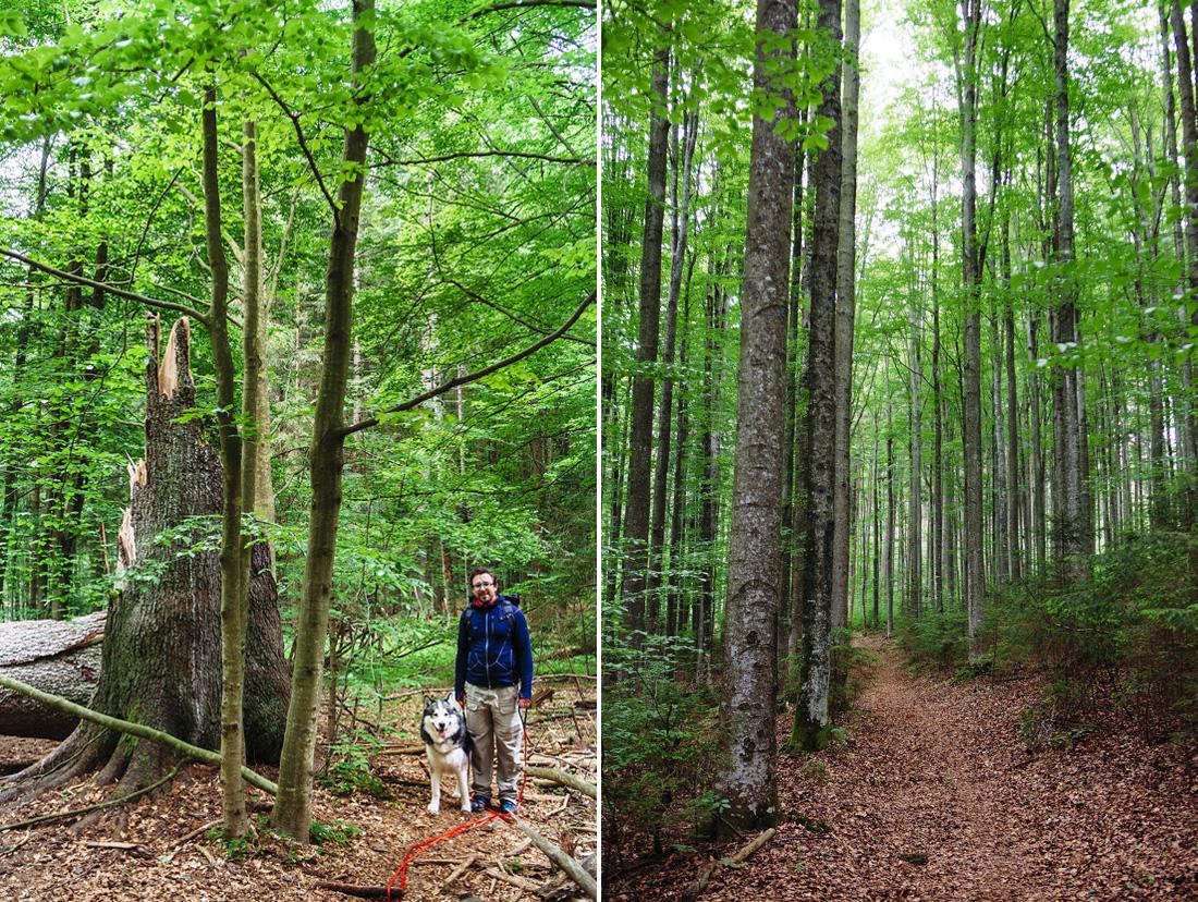 bavarian national forest