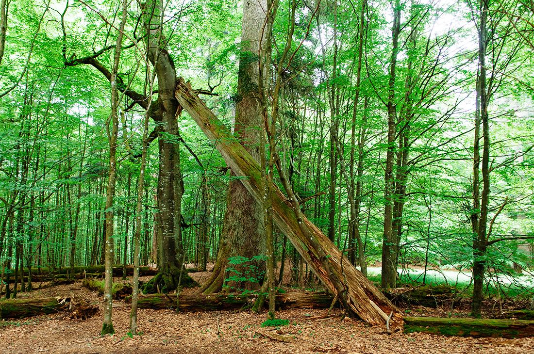 hans-watzlik-hain in bavarian national forest